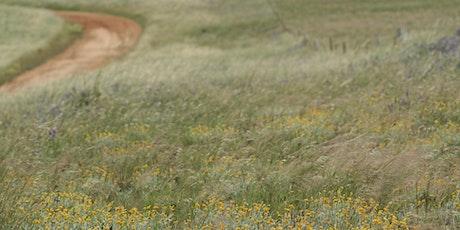Spring native grasslands walk tickets