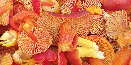 Copy of Full-day Fungi Identification Workshop (including simple wild lunch tickets
