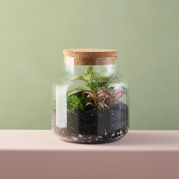 Create your own Terrarium Workshop with Green & Wild image