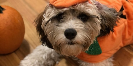 Outhouse Orchards 2nd Annual Halloween Dog Parade tickets