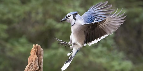 Elmwood Cemetery Bird and History Walk tickets