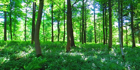 Shinrin-yoku (Forest Bathing) in Nower Wood Nature Reserve tickets