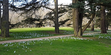 Forest Bathing at Clumber Park tickets