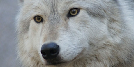 In the Company of Wolves: Conversation and Book Signing with Rick McIntyre tickets
