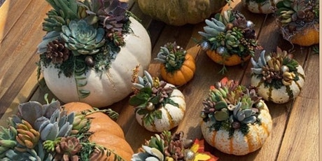 Succulent Pumpkin Worshop tickets