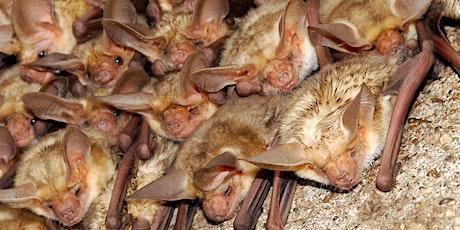 Gorgeous Wildlife Webinar Series: Bats tickets