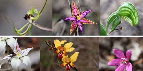 Search for the Queen of Sheba - Orchid Presentation tickets