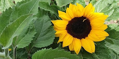 Glenburnie Farm Sunflower Picking WEEKEND SESSIONS tickets