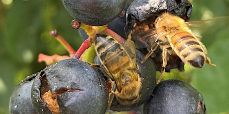 The Impact of Pesticides on the Microbiome and Health of Honey Bees tickets