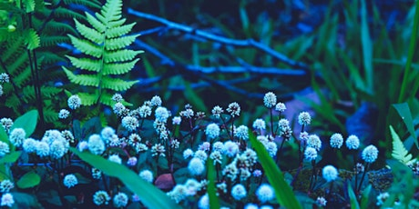 Native American Plants Garden Walk tickets
