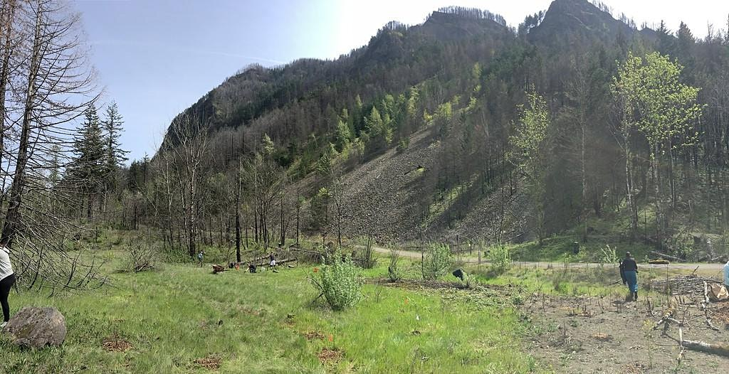 Planting Willows with Oregon State Parks