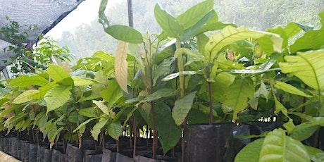 Taller de Injertía de Cacao tickets