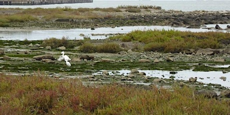 Protecting San Francisco Bay from invasive Spartina tickets