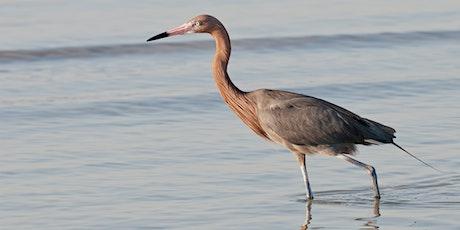 Wading Bird Walk tickets