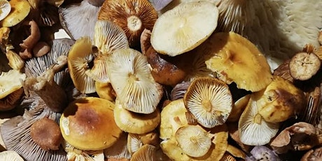 Halloween forage and mushroom magic, Buxton. tickets