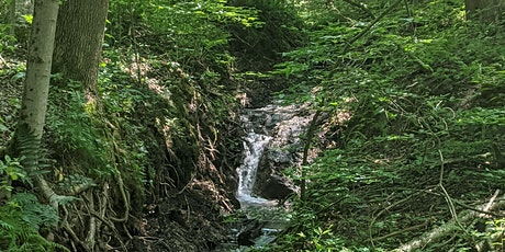Guided Forest Therapy Walk tickets