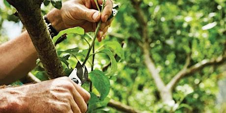 Winter Tree Care Tips boletos