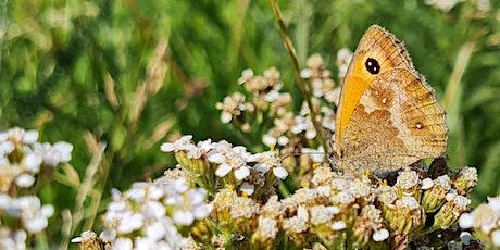 Butterfly Identification tickets