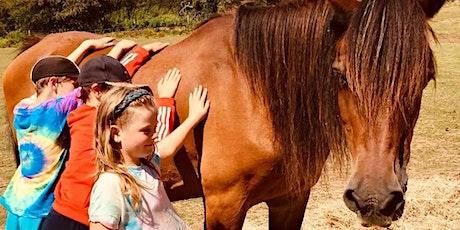 Tiny Tots Pony Experience tickets