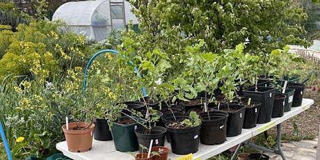 Pruning and Propagating  Fruit Bushes tickets