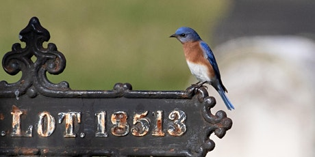 Feminist Bird Club 5th Anniversary Little Sit at Green-wood Cemetery Group1 tickets