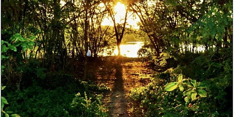 Therapeutic Forest Walk @ Learning Forest on Dec 12 (Sun) tickets