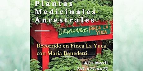 Plantas Medicinales Ancestrales (recorrido de la tarde) tickets