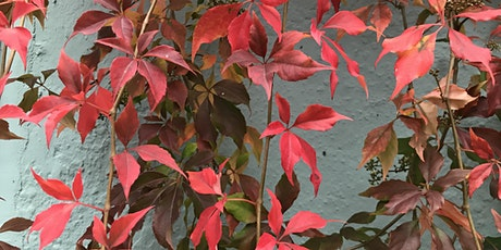 Autumn Gardening Workshop @waterworks_plant_co tickets
