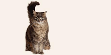 Online Cat Foster Orientation 11/22/21 tickets