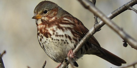 Late Fall Birding Excursion tickets
