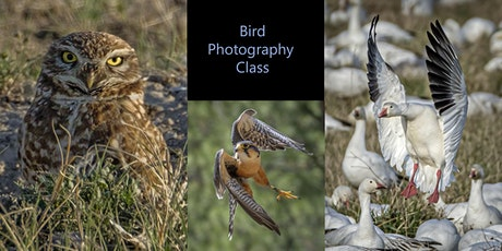 Add Birds to Your Photography Skills tickets