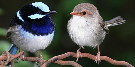 Infocus: Habitat Havens for Native Birds tickets