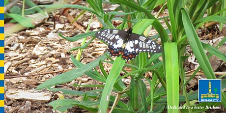 Butterfly workshop tickets