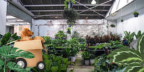 Canberra - Indoor Plant Warehouse Sale - Pet Friendly Focus! tickets