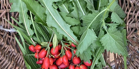 Special Samhain Foraging Workshop – End of the Harvest Season! tickets