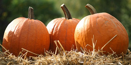 Ashtree Pumpkin Patch - Pick Your Own Pumpkins in Donegal Town tickets