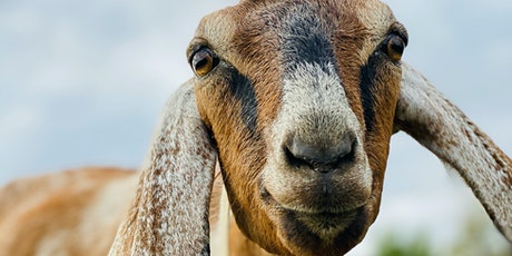 Goat Keeping Class for Beginners - Interactive, Hands-On & Fun for all ages tickets