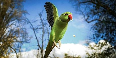 Bird in Flight Photography Workshop (Pair) tickets