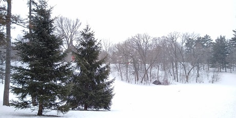 Walking with the Woods: Winter Forest Therapy (Donation-based) tickets