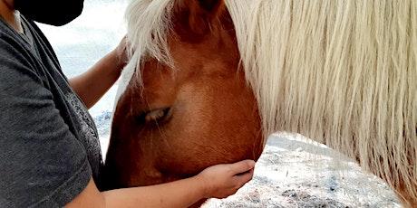 Self Care Healing Mini Retreat On The Farm tickets