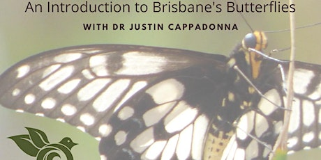 Seeing Past the Blur: An introduction to Brisbane's Butterflies tickets