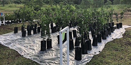 East Hawaii Outdoor Circle - 2021 Drive-Thru Tree Giveaway (One Free Tree) tickets