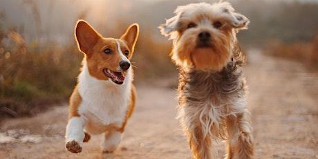 Taller de adiestramiento canino gratis entradas