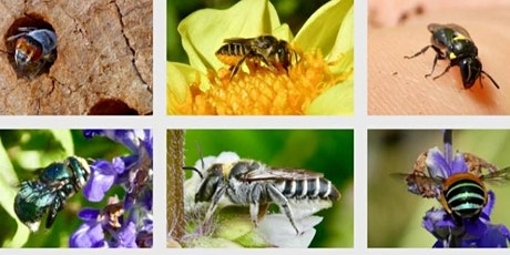 Learn to Build a Native Bee Hotel with local Barbara Mills tickets