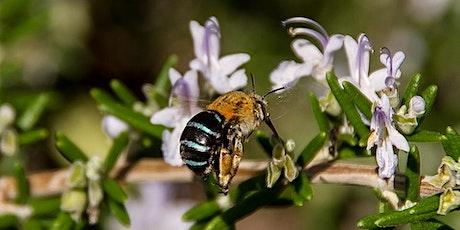 Native Bee Workshop tickets