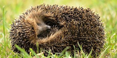 Swanwick Lakes Wildlife Tots: Happy Hibernators tickets