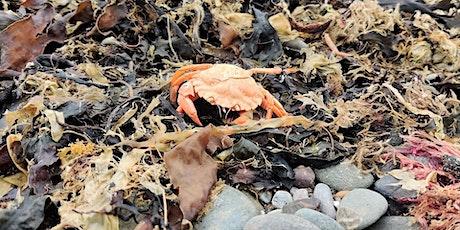 Creepy Crabs tickets