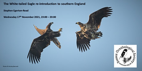 The White-tailed Eagle re-introduction to southern England tickets