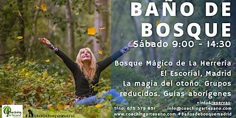 Baño de Bosque sáb 27 Nov - Otoño Bosque La Herrería El Escorial entradas