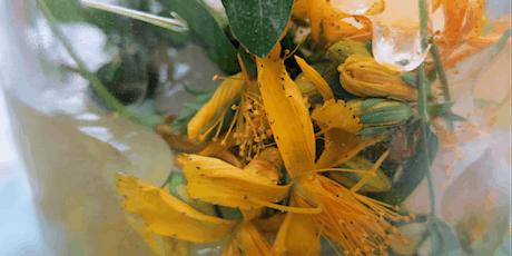 Herbalism Course – Navigating Winter through Herbal & Plant Spirit Medicine Tickets